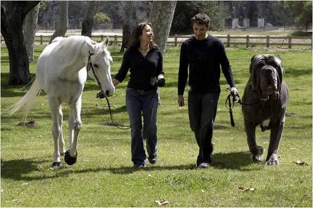 Biggest Animals In The World 171 Thiyaku S Blog